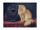 Blue, Cream Persian Cats Giclee Print by W. Luker