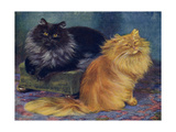 Smoke, Orange Persians Giclee Print by W. Luker
