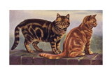 Two Tabbys on a Wall Giclee Print by W. Luker