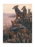 Jackals Black-Backed Giclee Print by Winifred Austen