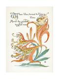 Plants, Lilium Tigrinum Giclee Print by Walter Crane