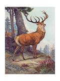 Red Deer, Austen, 1908 Giclee Print by Winifred Austen