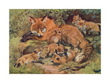 Fox, Vixen and Cubs 1909 Giclee Print by Winifred Austen