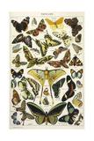 Butterflies in Larousse Giclee Print