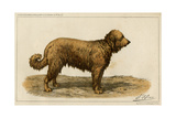 Brie Shepherd Dog at 1863 Paris Dog Show Giclee Print