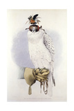 Illustration of a White Hawk Giclee Print
