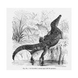 Reptiles, Crocodile Giclee Print