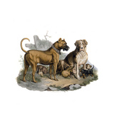 Mastiffs and Puppies Giclee Print