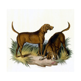 Bloodhounds, Astle Giclee Print