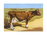 Guernsey Cow 1899 Giclee Print