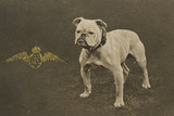 Rfc WW1 Bulldog Postcard Photographic Print