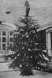 Queen Alexandra's Christmas Tree at Sandringham Photographic Print