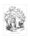 Origin Species, Ch Bennett, Fool - Donkey Giclee Print by Charles H Bennett