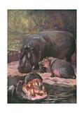 Hippopotami 1909 Giclee Print by Cuthbert Swan