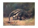 Ant-Eater, Cuthbert Swan Giclee Print by Cuthbert Swan