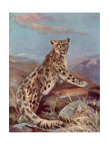Snow Leopard (Or Ounce) Giclee Print by Cuthbert Swan