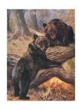 Bears, Cuthbert Swan Giclee Print by Cuthbert Swan