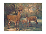 Virginian Deer, Wild Bst Giclee Print by Cuthbert Swan