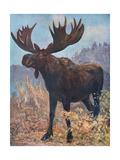 Moose (Elk), Cuthbert Swan Giclee Print by Cuthbert Swan