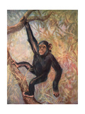 Chimpanzee, Wild Beasts Giclee Print by Cuthbert Swan
