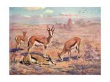 Springbok, Cuthbert Swan Giclee Print by Cuthbert Swan