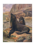 Sea Lions 1909 Giclee Print by Cuthbert Swan
