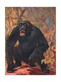 Gorilla, Cuthbert Swan Giclee Print by Cuthbert Swan