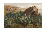 Plants, Cactus, Mexico Giclee Print by Ernst Heyn