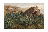 Plants, Cactus, Mexico Giclee Print by Ernst Heyn