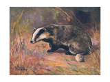 Badger, Swan, Wild Beasts Giclee Print by Cuthbert Swan