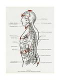 CW Leadbeater - Chakras and Nervous System Digitálně vytištěná reprodukce