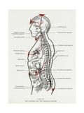 Chakras and Nervous System Premium Giclee Print by CW Leadbeater