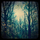Enchanted Forest Photographic Print by Meagen Higginbottom