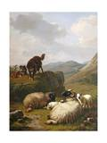 Sheep and Dogs, 1861 Giclee Print by Eugene Joseph Verboeckhoven