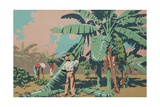 Cutting Bananas in Jamaica Giclee Print by Frank Newbould