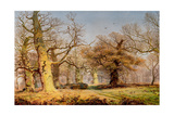 Oak Trees in Sherwood Forest, 1877 Giclee Print by Andrew Maccallum