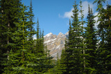 Banff Mountain Peak from Forest Nature Photo Poster Posters