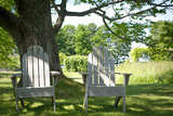 Adirondack Chairs Under A Tree Nature Photo Poster Print