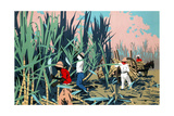 Reaping Sugar Canes in the West Indies Giclee Print by Frank Newbould