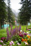 Banff Flowers In National Park Nature Photo Poster Posters