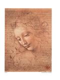 Testa Di Faniciulla Detta Posters by  Leonardo da Vinci