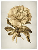 Gold Tulip II Giclee Print by Kate Bennett