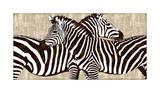 Zebra Gathering Giclee Print by Darren Davison