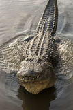 USA, Florida, Orlando, Alligator Doing Water Dance at Gatorland Photographic Print by Lisa S. Engelbrecht