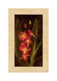 Orchid Giclee Print by John Seba