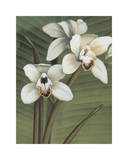 Orchid with Palm I Giclee Print by Andrea Trivelli