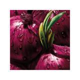 Onions Giclee Print by  Alma'ch