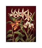 Orchid Trio I Giclee Print by Rodolfo Jimenez