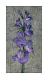 Purple Gladiola Giclee Print by John Seba