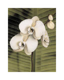 Orchid with Palm II Giclee Print by Andrea Trivelli